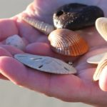 Hand full of seashells